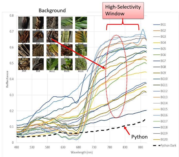 Hyperspectral characterization of pythons and background samples typically found in the everglades